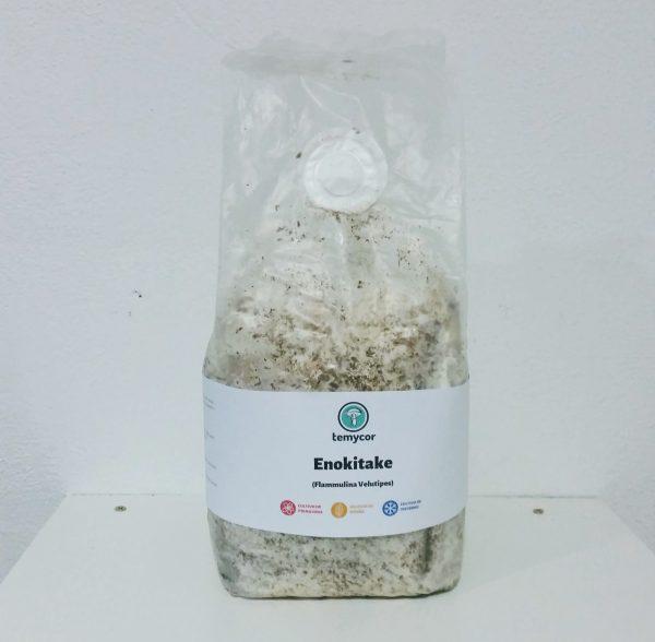 kit de cultivo de setas enoki