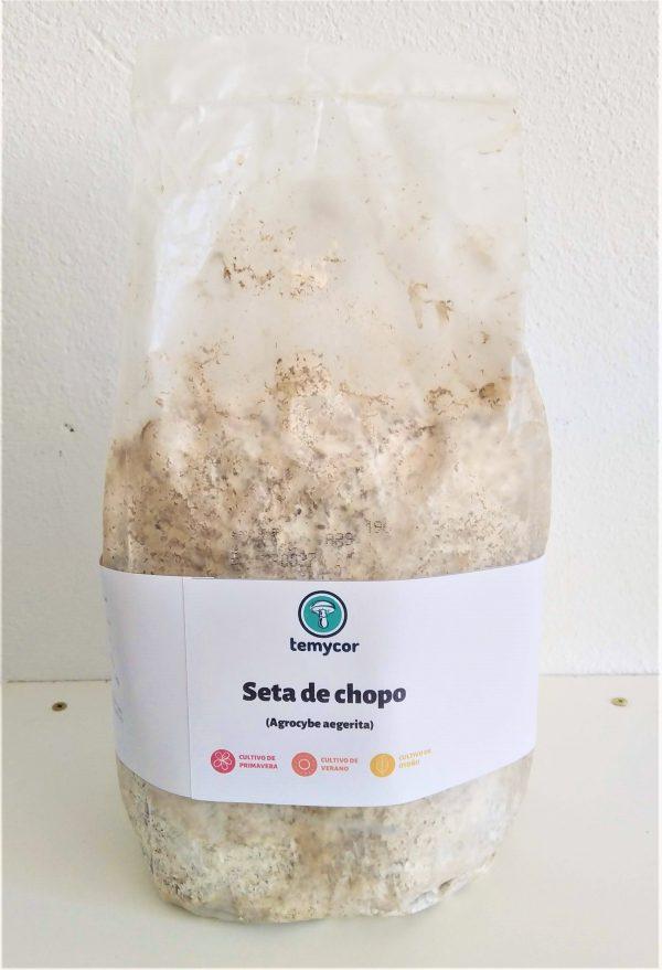 Kit de cultivo de setas de chopo